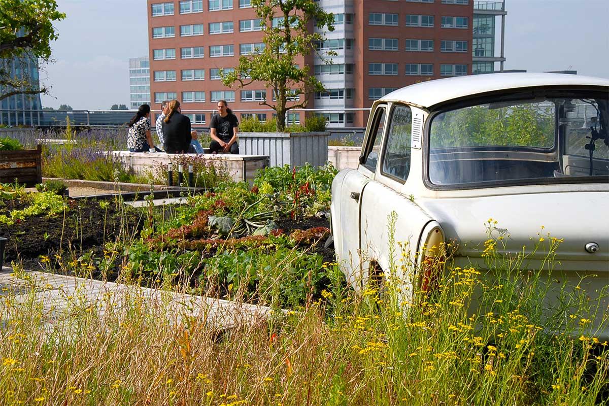 Dakpark Daktuin B. Bylon Dakdokters Amsterdam