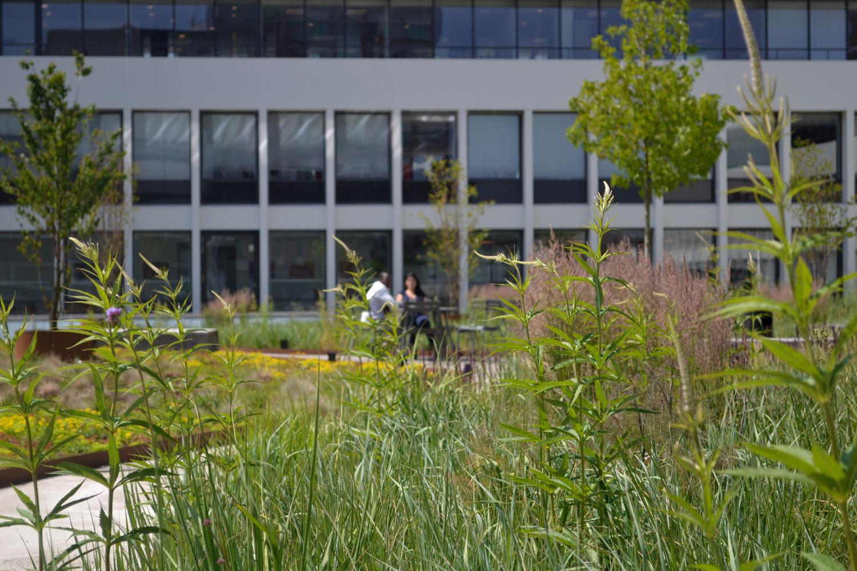 Dakdokters Breevast Dakpark Groendak Daktuin Dakterras Amsterdam