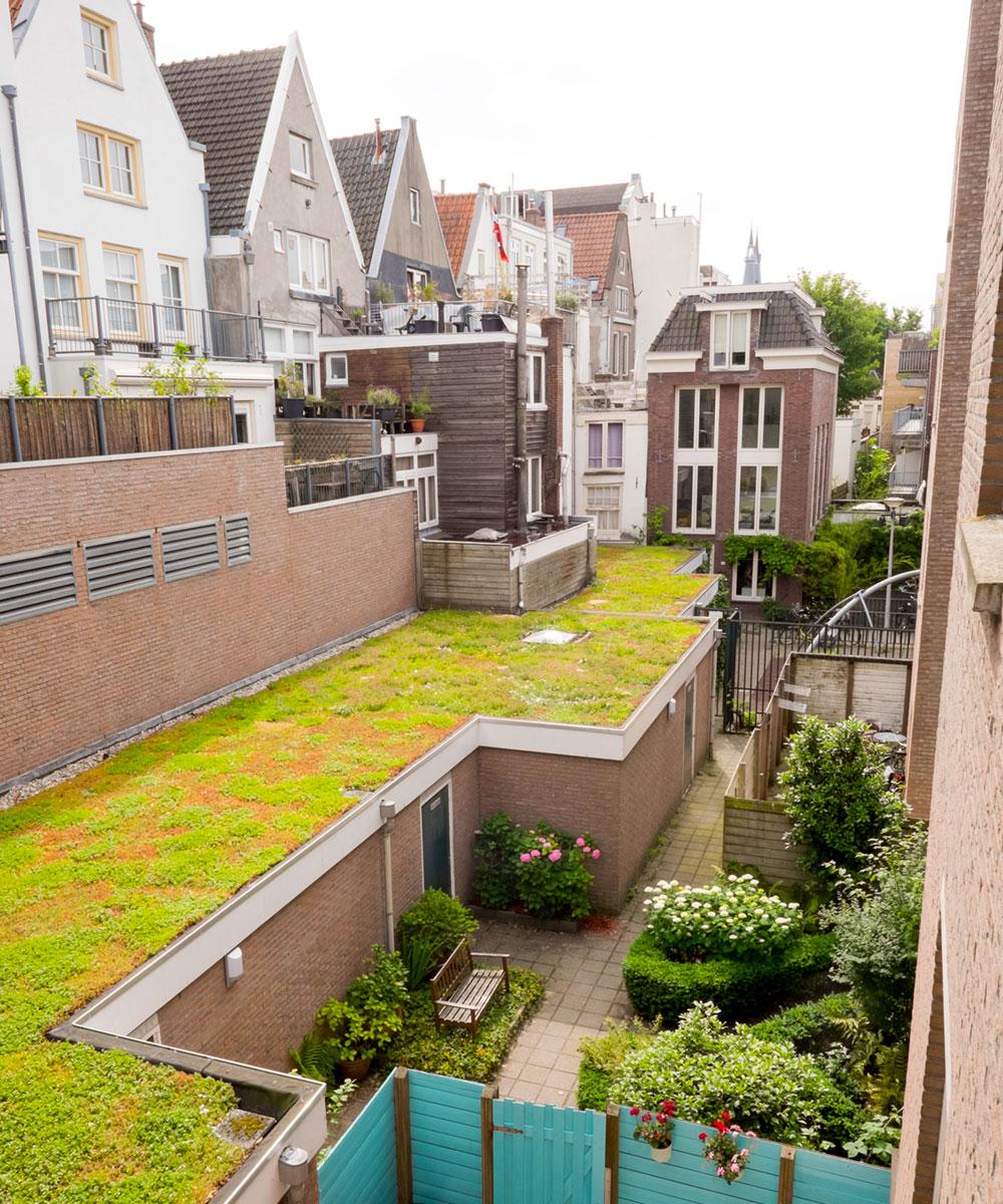 Dakdokters Amsterdam - Groendak Daktuin Dakterras - Vinkenstraat