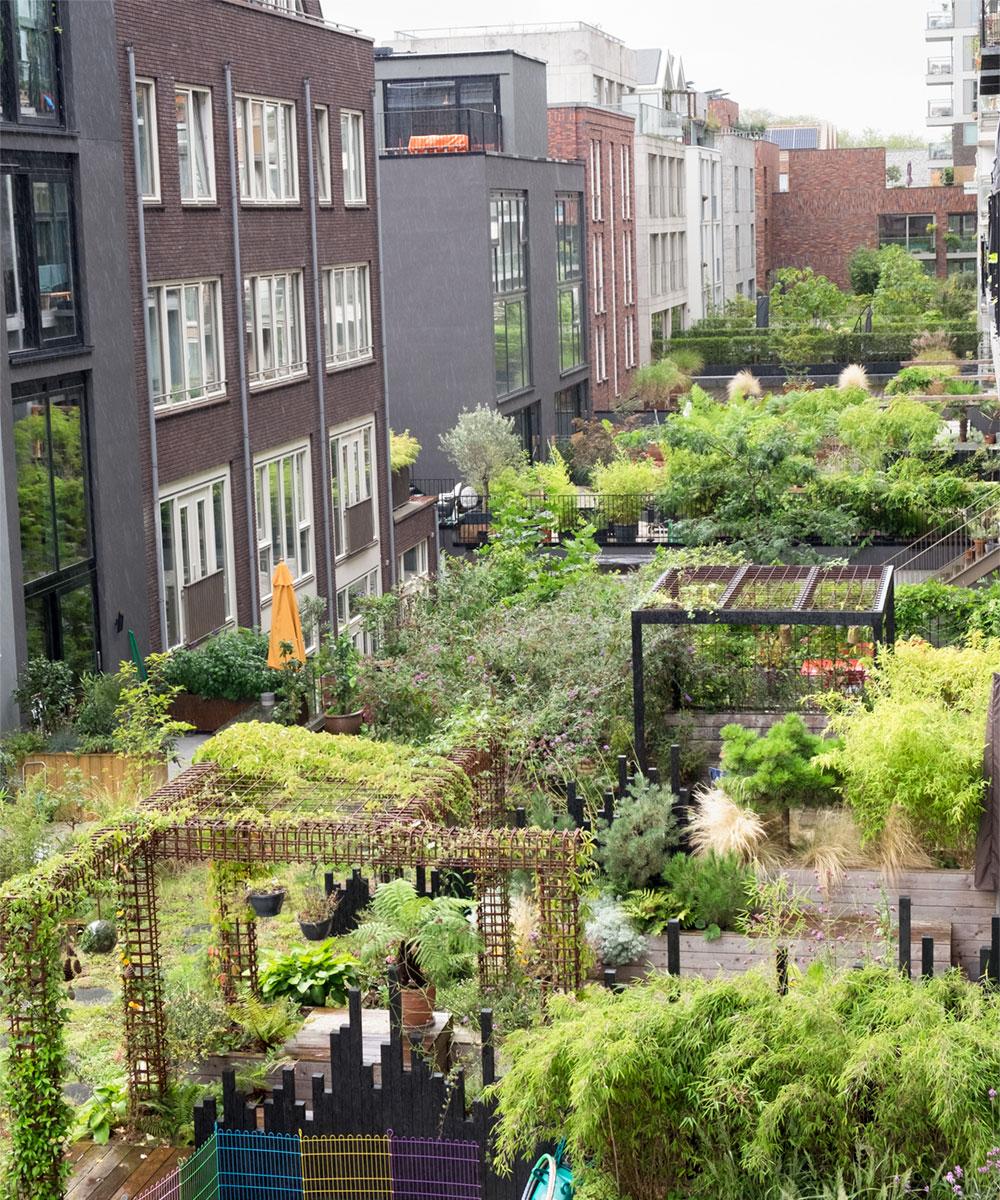 Dakdokters Amsterdam - Groendak Daktuin Dakterras - Houthavens
