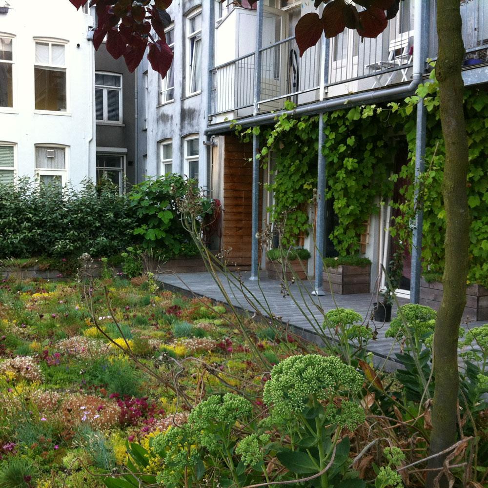 Dakdokters Amsterdam - Groendak Daktuin Dakterras - Begroeid Dak